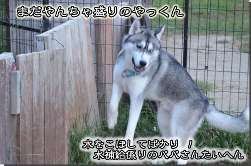 DSC_0680-2.jpg