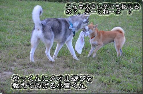 DSC_0683-2.jpg