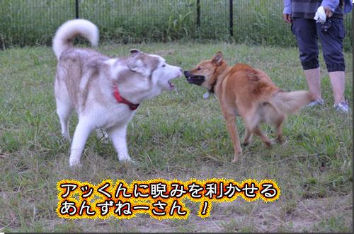 DSC_0704-2.jpg