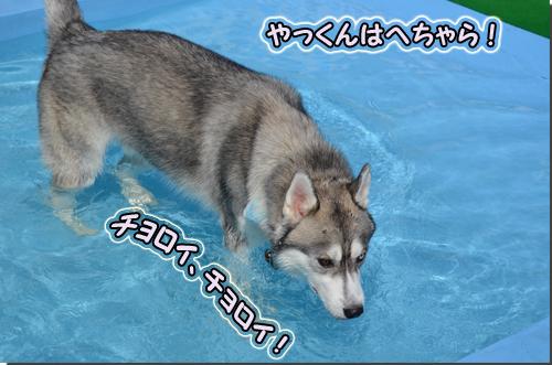 DSC_0710-1.jpg