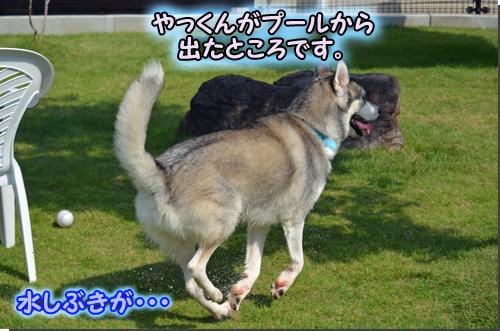 DSC_0711-1.jpg