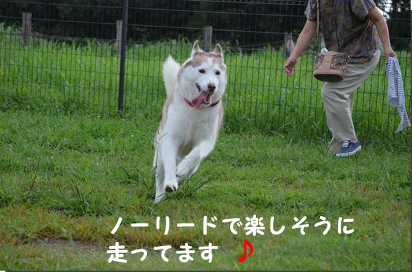 DSC_0852.jpg