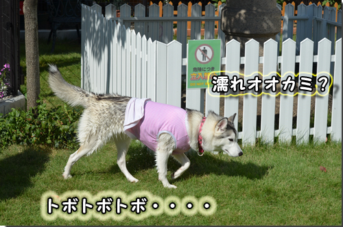 DSC_0911-1.jpg