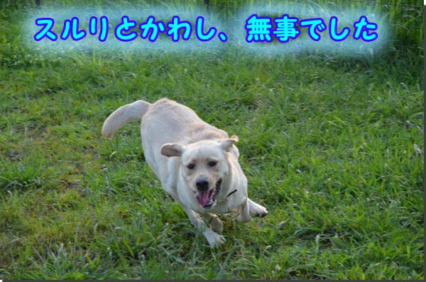 DSC_0937-2.jpg