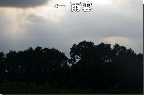 DSC_0942.jpg