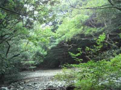 20101106森林浴S-1