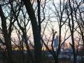 木立から見える街