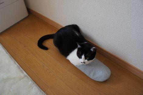スリッパをはいた猫