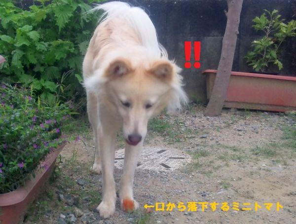20120507_5.jpg