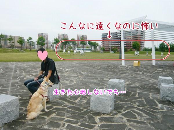 20120623_10.jpg
