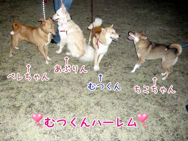 20120623_7.jpg