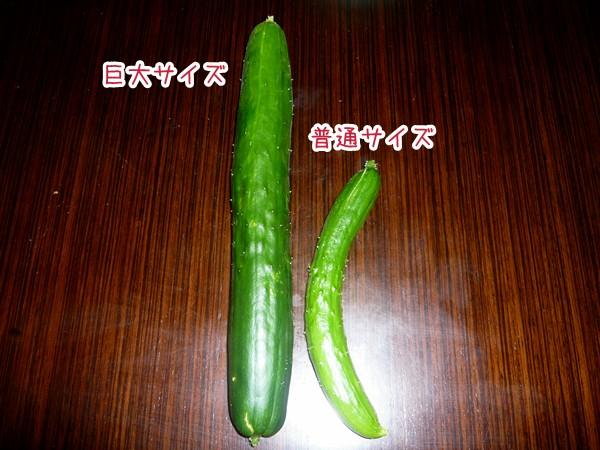 20120703_3.jpg
