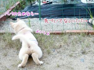 20120703_6.jpg