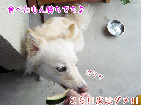 20120711_8.jpg