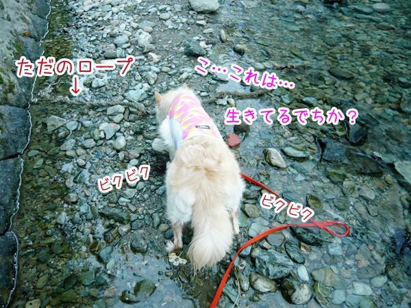 20120801_2.jpg