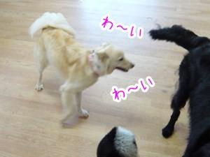 20120802_4.jpg