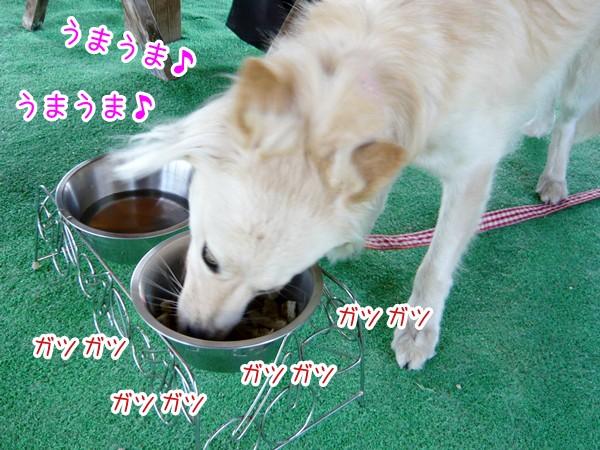 20120811_6.jpg