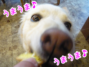 20120814_14.png