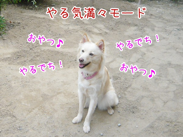20120819_6.jpg