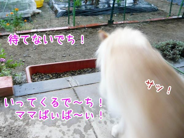 20120820_6.jpg