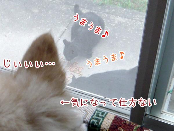 20120821_2.jpg
