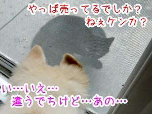 20120821_6.jpg