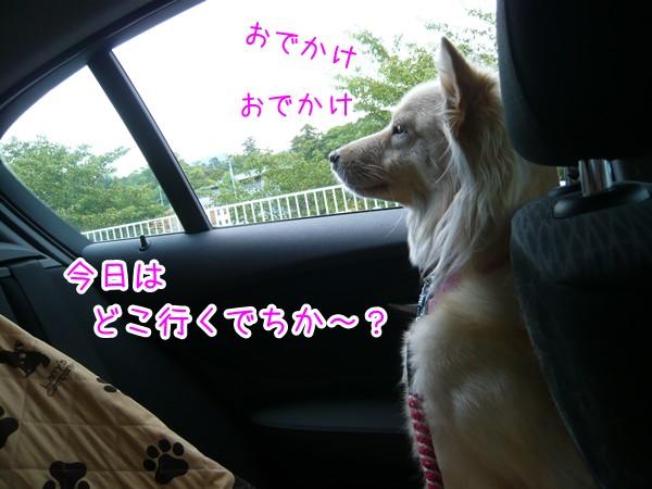 20120904_1.jpg