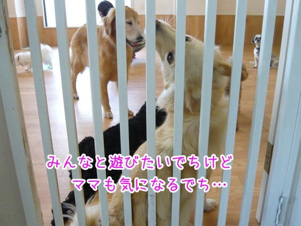 20120906_5.jpg