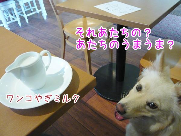 20120912_4.jpg