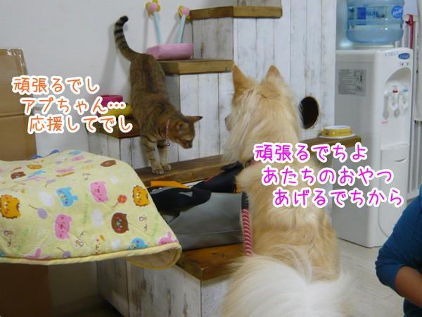 20120914_9.jpg