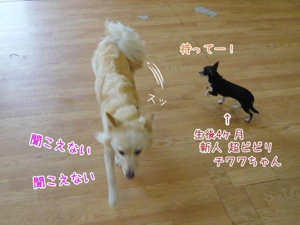20120920_3.jpg