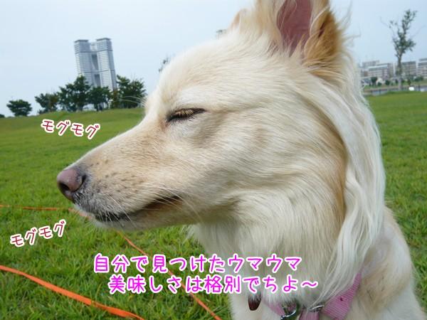 20120921_6.jpg
