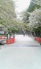 s東照宮桜