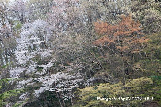 110414shiroyama3.jpg