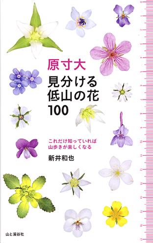 120606yamakei1.jpg