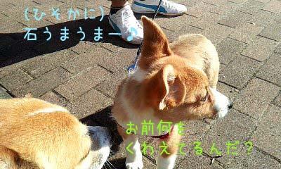 CameraZOOM-20120129094803449.jpg