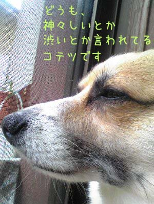 SH3400101.jpg