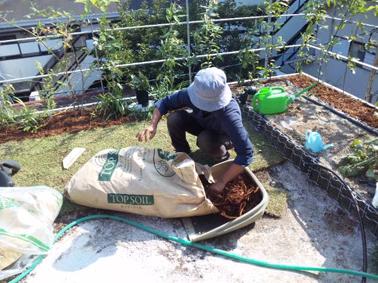 緑化基盤のバーク仕上