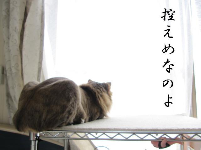 IMG_2678.jpg