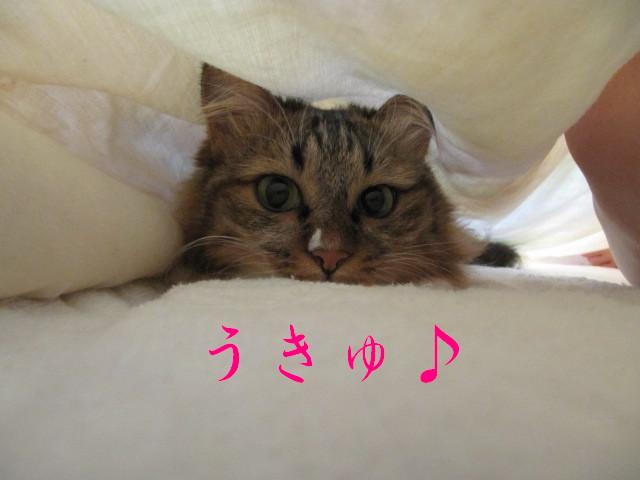 IMG_3074.jpg