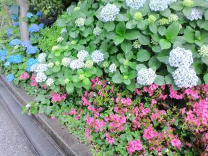 6月の花壇