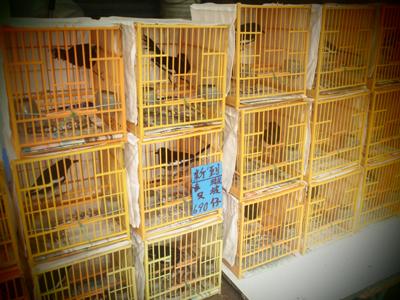 小さなかごに入ったたくさんの鳥達