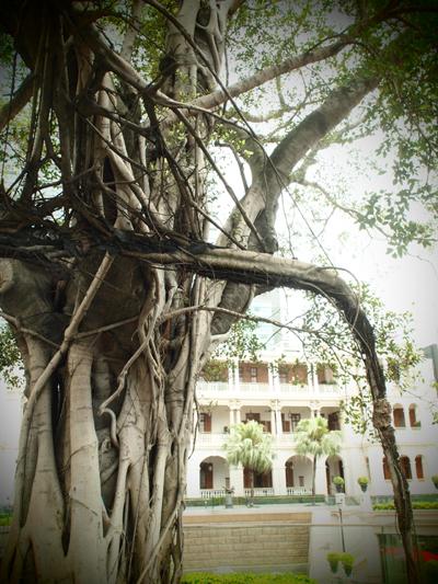 昔からある大きな木