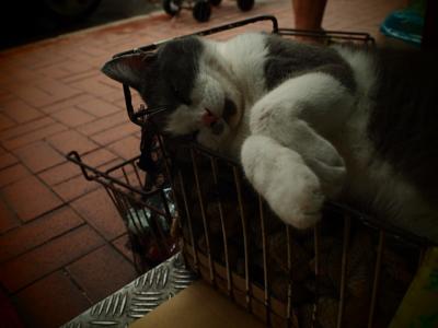 暑さにグロッキー気味の猫ちゃん
