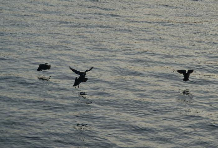飛び立つ鴨-2