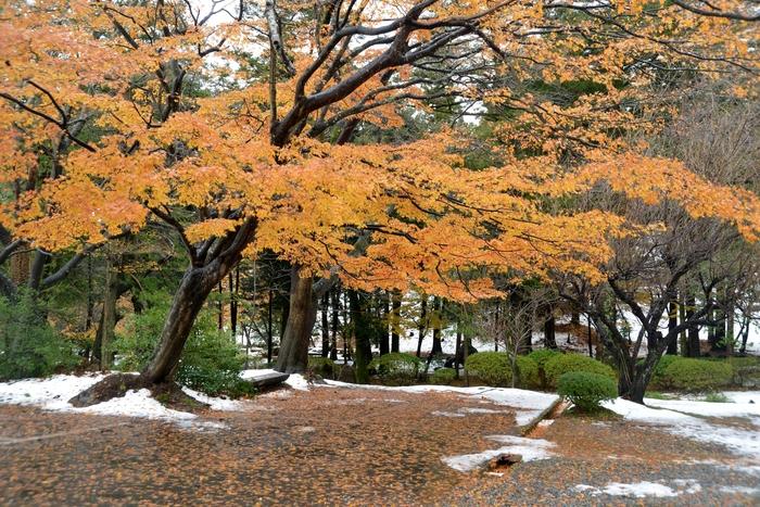 初雪の残る公園-1