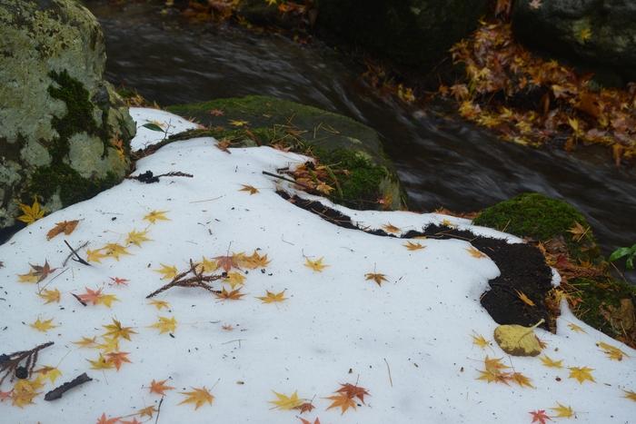 雪と落ち葉-4