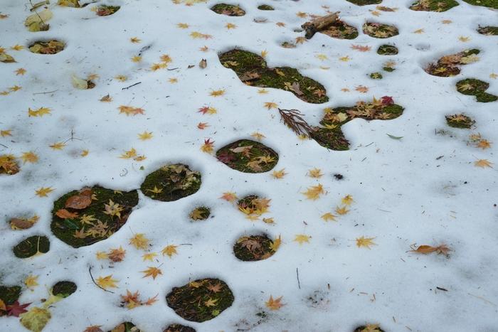 雪と落ち葉-1