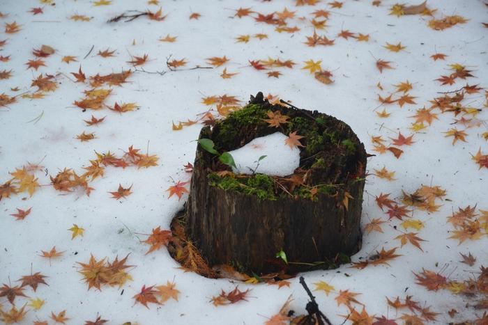 雪と落ち葉-2