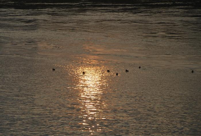 朝陽と鴨-1